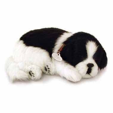 Ademende knuffel hond border collie