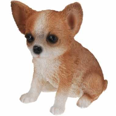 Chihuahua beeldje voor binnen 17 cm