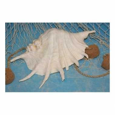 Decoratieve witte schelp 22 cm