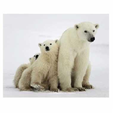 Dieren magneet 3d ijsberen