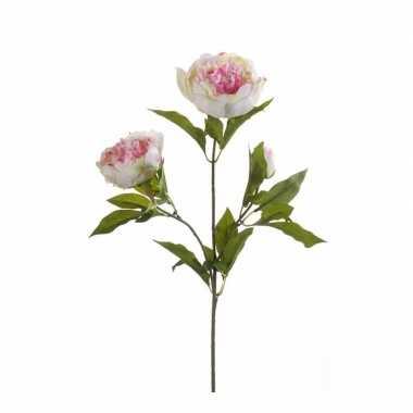 Licht roze pioenroos op steel 70 cm