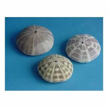 Mini zeeappel 8 cm