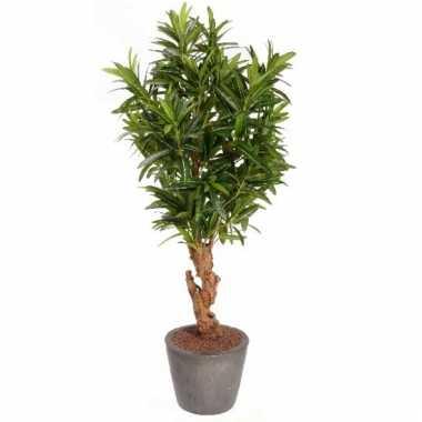Oleander struiken 130 cm