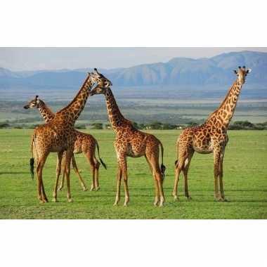 Onderlegger met giraffe print 28 x 44 cm