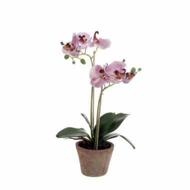 Paars phalaenopsis in pot 42 cm