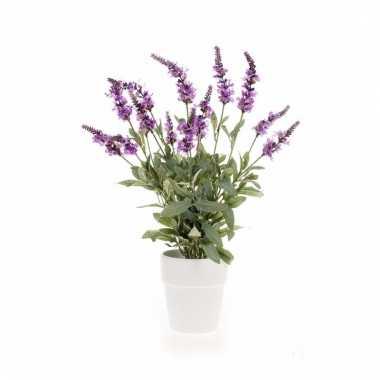 Paarse lavendel in pot 60 cm