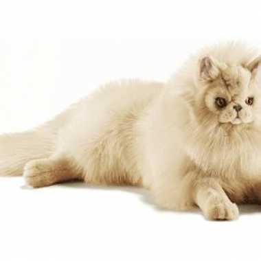 Persische katten knuffels 70 cm