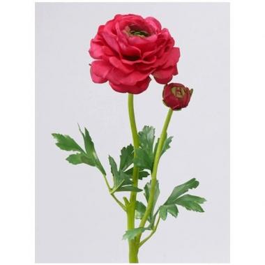 Ranonkel rood/roze 51 cm 1 dichte knop