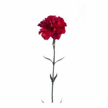 Rode dianthus op steel 65 cm