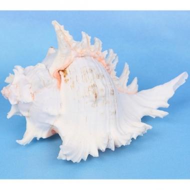 Zalmroze decoratie schelp 19 cm