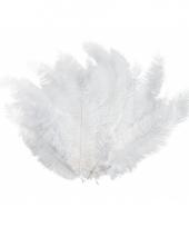 12 lange witte pluim veren