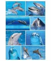 24x dolfijnen dieren stickers