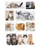 24x poezen katten kittens dieren stickers