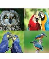 4x dieren magneten vogels