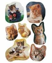 63x katten poezen dieren stickers