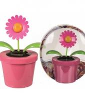 Bloem zonne energie roze bloempot