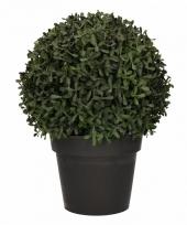 Buitenplant boxwood ball 35 cm