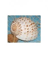 Decoratie schelpen teseelata 10 cm
