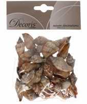 Decoratie schelpen zeeslak strombus urseum 3 cm