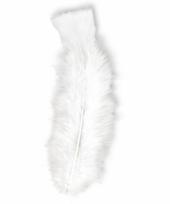 Decoratieve veren wit