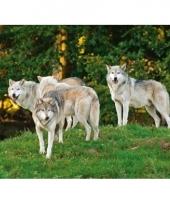 Dieren placemat wolven 3d