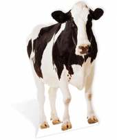 Foto bord van een koe