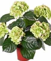 Groen rozee namaak hortensia in pot 36 cm