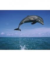 Grote posters van dolfijn in de zee