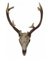 Hert schedel met gewei 26 cm
