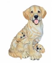 Honden beeldjes zittende golden retriever met puppies