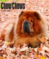 Honden kalender 2018 chow chows