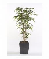 Kantoorplant bamboe promo 150 cm