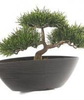 Kantoorplant japanse den 26 cm