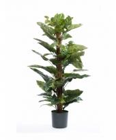 Kantoorplant philodendron 120 cm