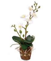 Kunst bloemen orchidee