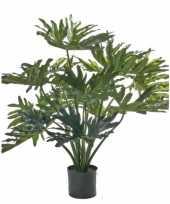 Kunst planten philondendron