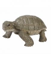 Levensechte schildpad 14 cm
