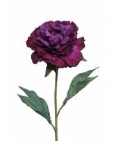 Nep pioenroos paars 67 cm