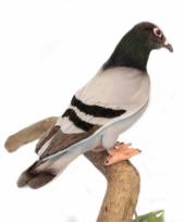 Pluche levensechte duif 29 cm