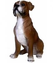 Polystone beeld bruine boxer hond 25 x 12 x 20 cm
