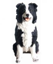 Polystone beeldje border collie hondje 26 x 24 x 14 cm