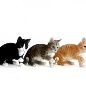 Polystone beeldje spelende rode kat 35 cm