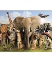 Poster wilde dieren 61 x 91 5 cm
