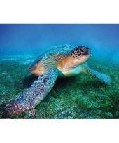 Poster zeeschildpad 61 x 92 cm