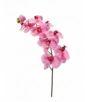 Roze phalaenopsis op steel 100 cm