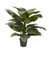 Spathiphyllum nep plant met 18 bladeren