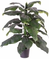 Spathiphyllum nep plant met 31 bladeren