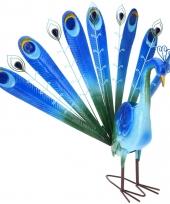 Tuinbeeld blauwe pauw 60 cm