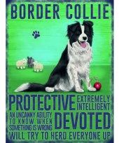 Wand decoratie bordercollie