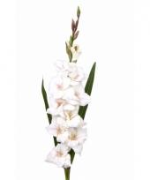 Witte kunst gladiolen